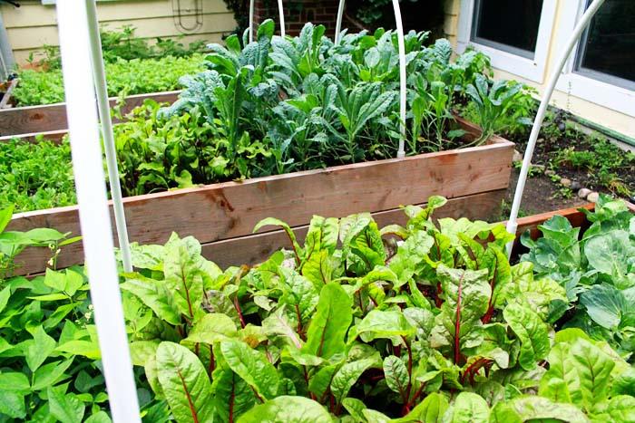 How to be a Suburban Farmer