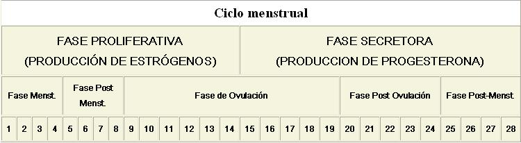 Ciclo Menstrual