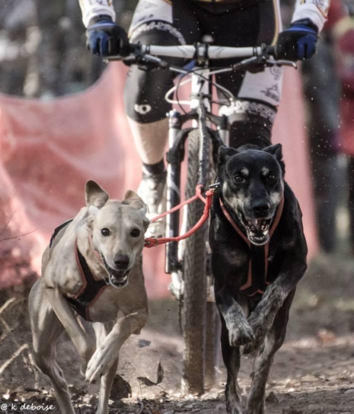 Dirty Dog Dryland Derby 2014 - Photo by Karen DeBoise