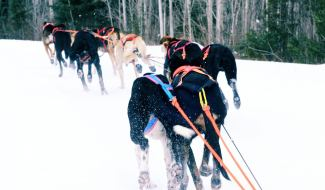 rides tours eurohound sled dogs in action