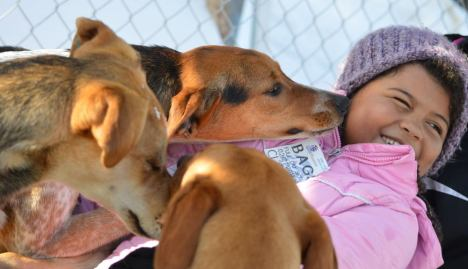 eurohound puppy kisses