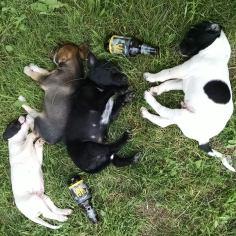 puppies drinking beer