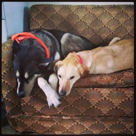 best dog friends
