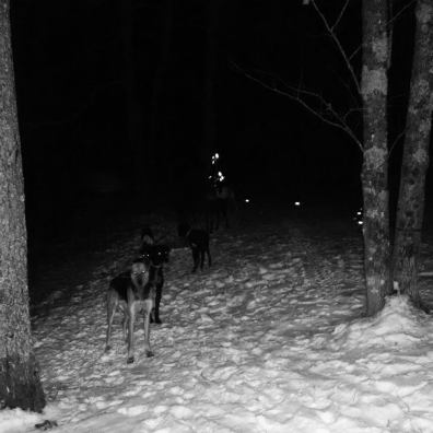 training sled dogs in the dark eurohound