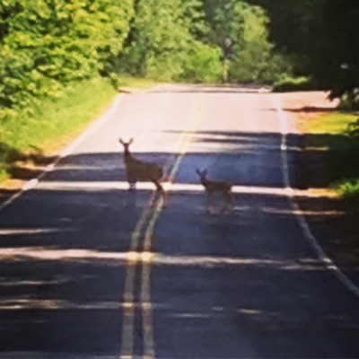 Deer On The Ride!