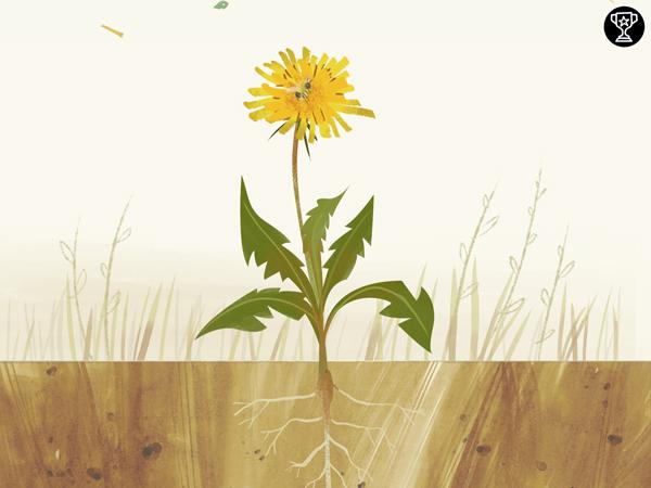 Wunderschöne Biologie Lern App über Pflanzen für Kinder