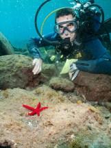 Adrián, Estrella de mar serpiente (Ophidaster ophidianus), Las Eras - 02012011