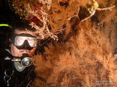 Coral negro, Juan, Teno - 08012011