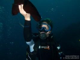 20110508 1632 - Abi, Las Eras, Vaca de mar (Aplysia fasciata)