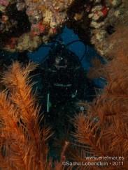 20110821 1140 - Coral negro, Isra, Teno