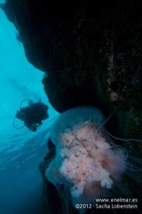 20120211 1109 - enelmar.es - Medusa (Escifomedusa), Muelle de Porís de Abona-2
