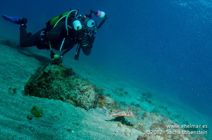 20120221 0952 - enelmar.es - Muelle de Porís de Abona, Mundi, Rubio (Chelidonichtys lastoviza)