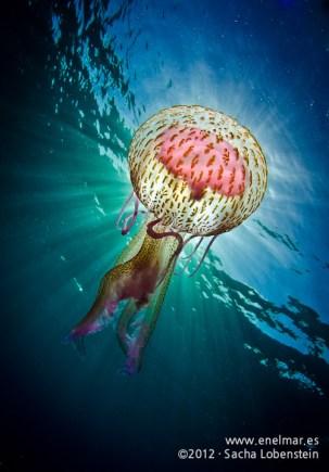 Medusa en El Porís