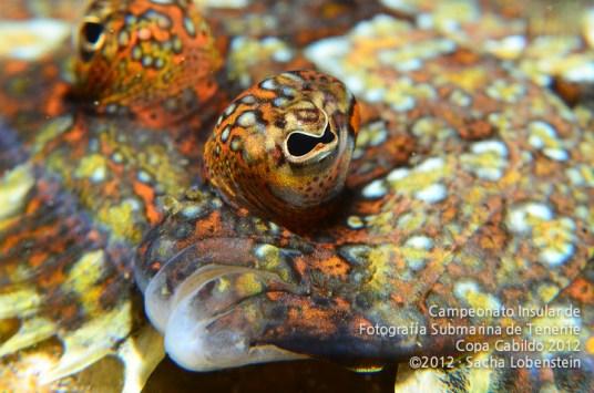 20120311 1035 - enelmar.es - PP - Primer plano pez