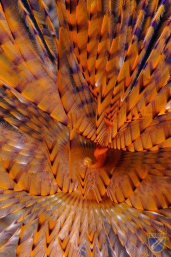 XV Copa Cabildo de Fotografía Submarina 2012 - Michael James Sealy, MN - Macro no pez