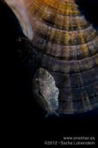 20120630 1305 - enelmar.es - Babosa, Muelle de El Porís de Abona