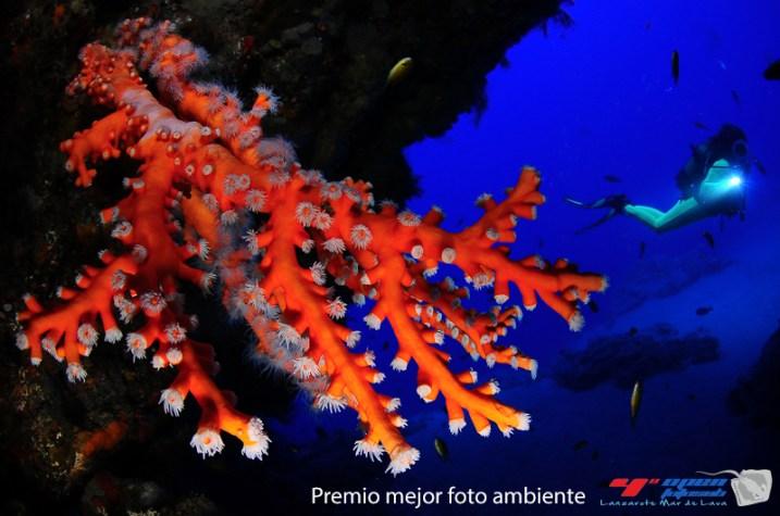2º - 300 puntos: Eladio Frias y Joana Pereira (Mejor foto de ambiente)
