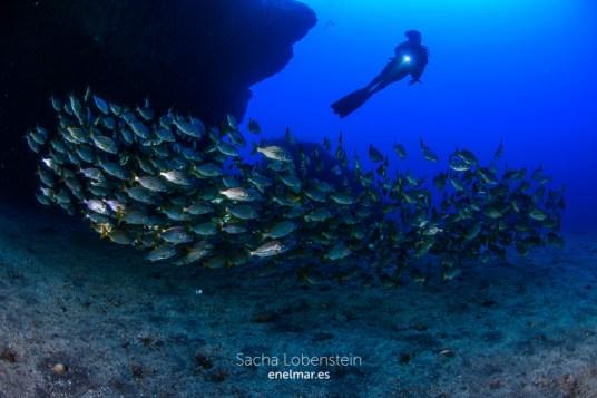20151011-1025-SachaLobenstein-enelmar.es-Punta Prieta - El Espigon