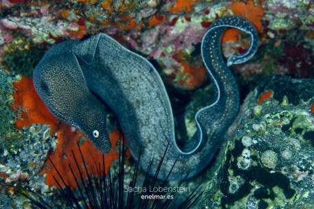 20151031-1048-SachaLobenstein-enelmar.es-Punta de Los Canarios