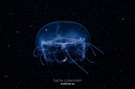 20151228-2140-SachaLobenstein-enelmar.es-Radazul