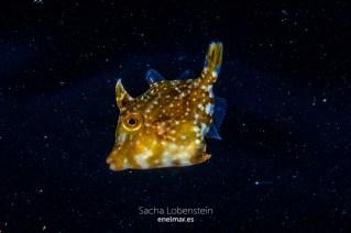 20151228-2149-SachaLobenstein-enelmar.es-Radazul