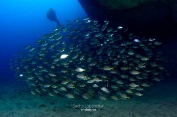 20160110-1006-SachaLobenstein-enelmar.es-Punta Prieta - El Espigon < Güímar < Tenerife < Zonas de Buceo