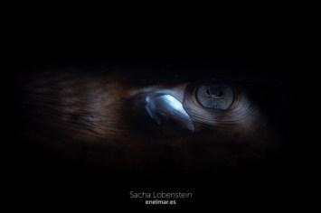 20160807-1146 - Sacha Lobenstein - enelmar.es - Las Eras