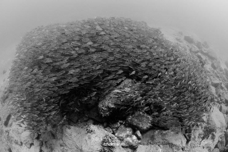 20161008-1302-sacha-lobenstein-enelmar-es-playa-de-la-cueva