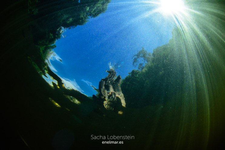 20161009-1318-sacha-lobenstein-enelmar-es-presa-de-meriga
