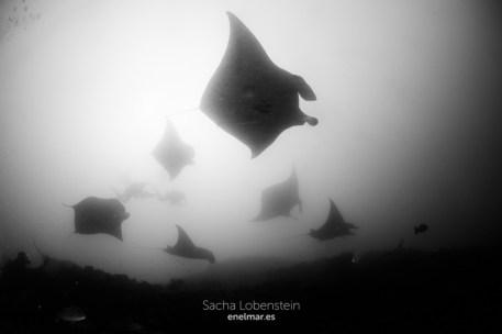 20170129-0900 - Sacha Lobenstein - enelmar.es - Moofushi Reef