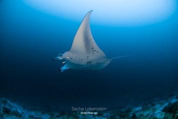 20170129-1230 - Sacha Lobenstein - enelmar.es - Moofushi Reef