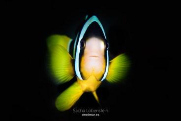 20170129-1639 - Sacha Lobenstein - enelmar.es - Raddhigga Thila-2