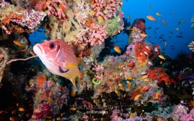 Descubriendo los colores submarinos de Maldivas