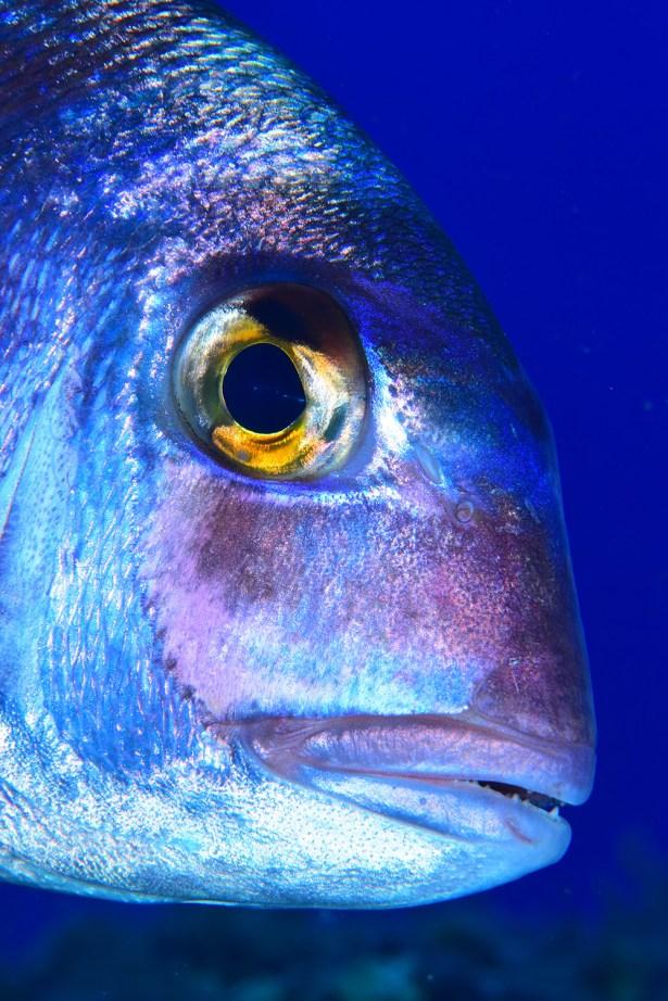 Primer plano de pez: MEDALLA DE BRONCE