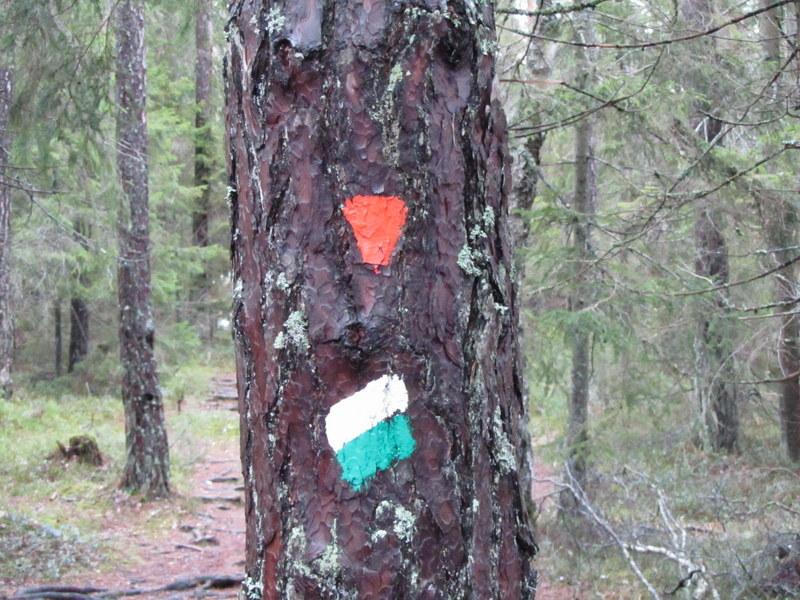 Träd med markering för slinga