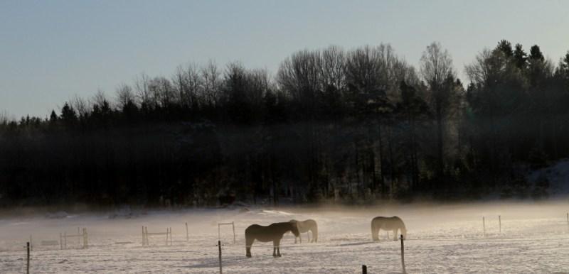 mina-vinterbilder-tyresta-by-häst
