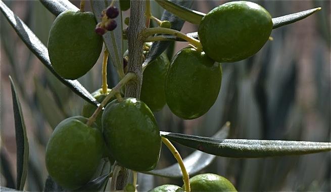 Obtienen hormigón a partir de biomasa de olivo