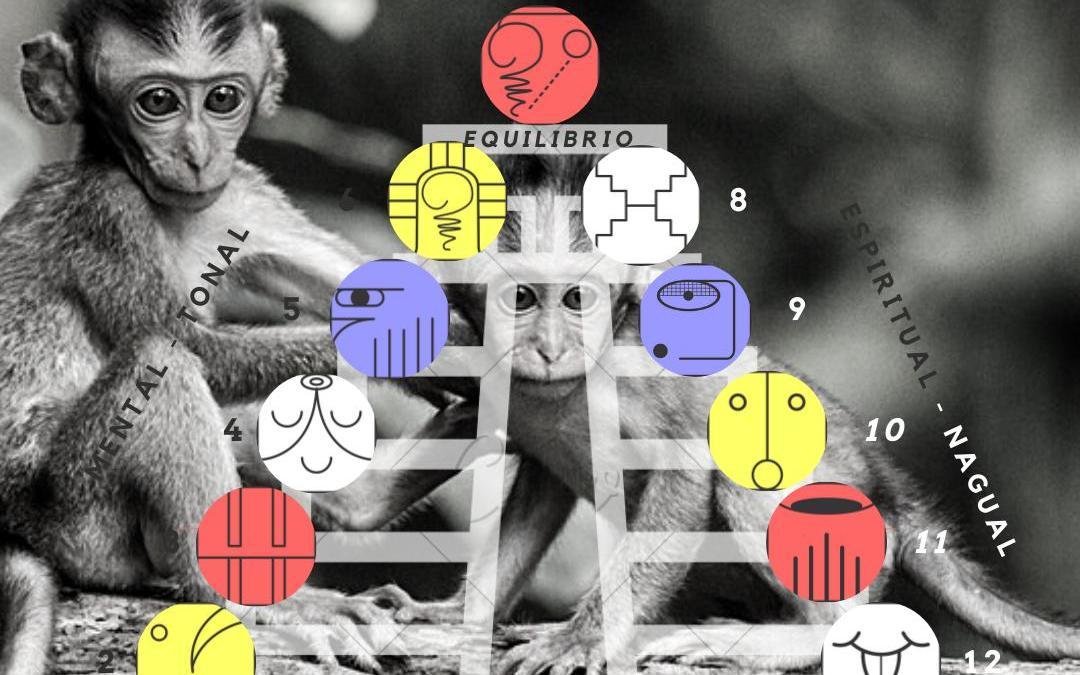 Onda Encantada del Mono