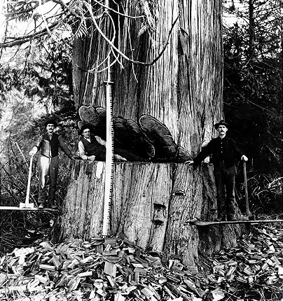 debardeur forestier