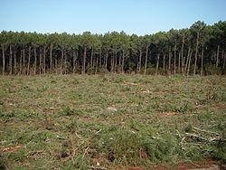 gyrobroyeur forestier