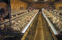 hangar agricole a vendre
