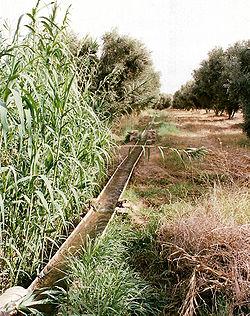 irrigation agricole