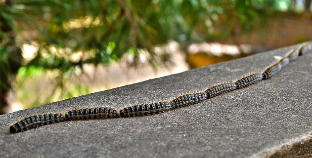 pelle caterpillar