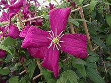 pergola pour fleurs