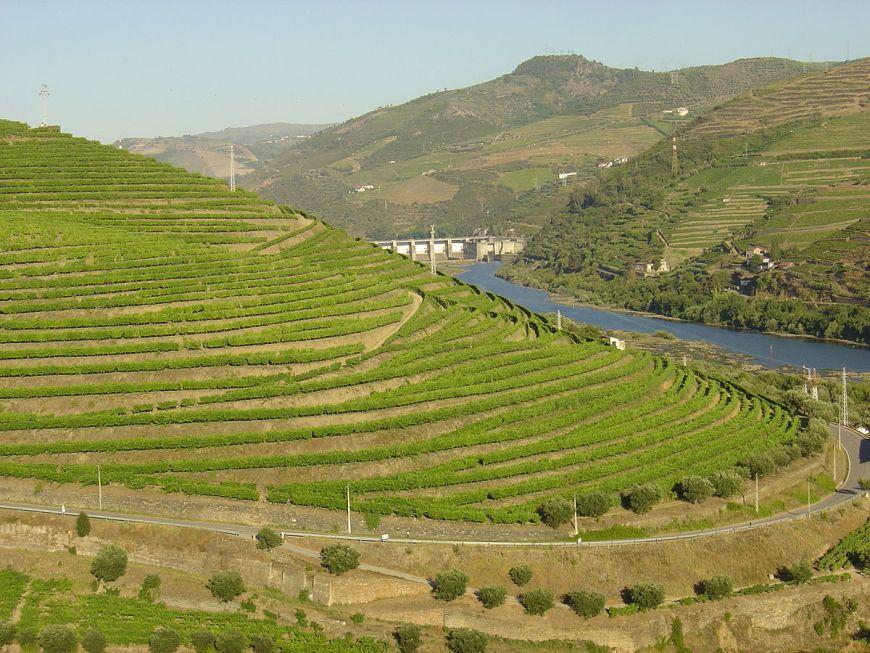 viticulture définition