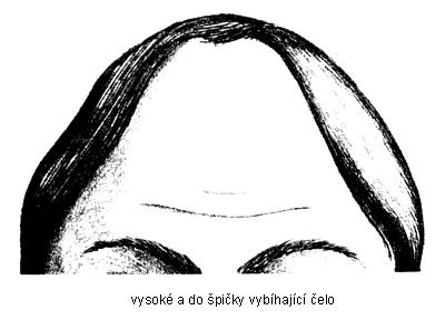 vysoké čelo s - Pět nejčastějších tvarů čela odkrývá osobnost - 2