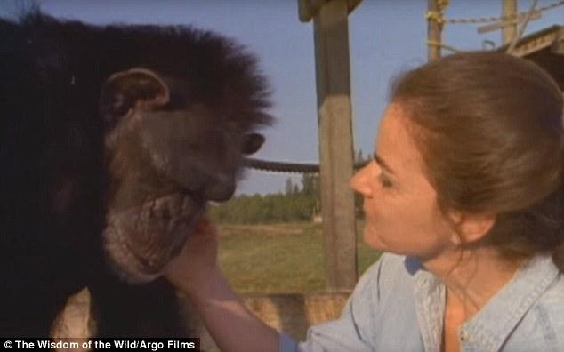 ch07a - Šimpanzi poznali svou pečovatelku po 25 letech