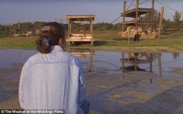 ch10 - Šimpanzi poznali svou pečovatelku po 25 letech