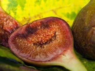 ad36ba5f678b8762b9a7a3dcb491d564 - Plodiny odpovídají tvarem našim orgánům 3