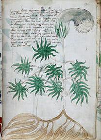 voy01a - Voynichův rukopis: Popisuje paralelní světy?